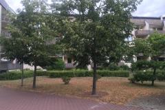 Erziehungsfachstelle-in-Dessau-3