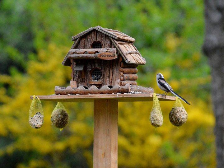 bird-740970_1280